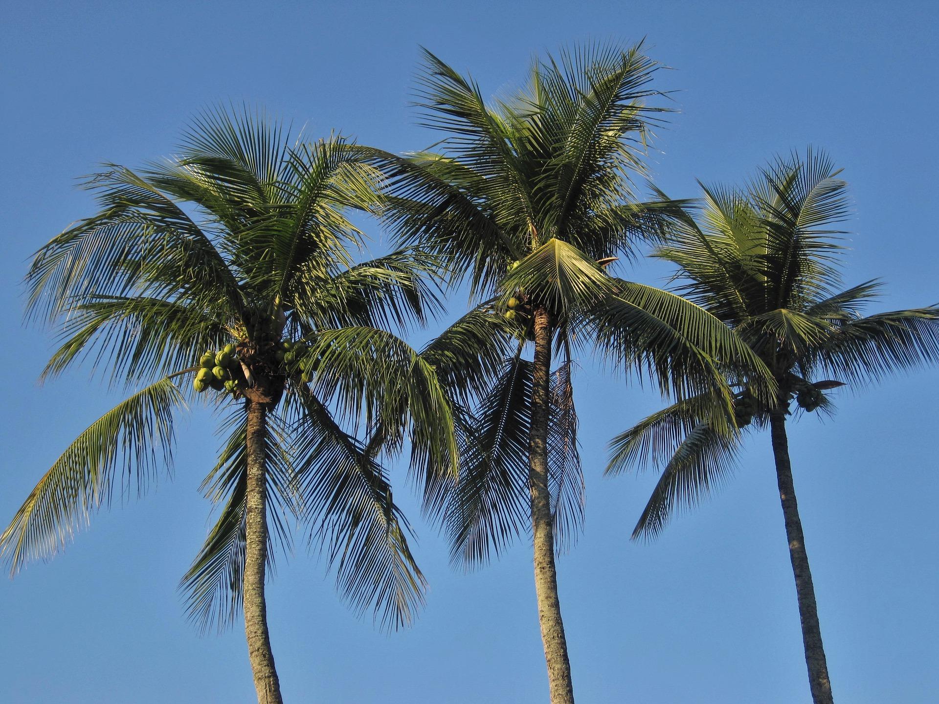 royal-palms-1225858_1920