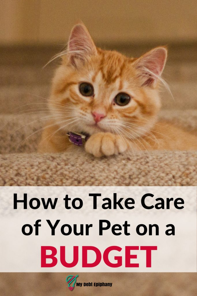 How to Take Care of Your Pet on a Budget